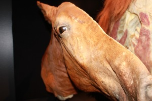 Yes, this is a sliced up horse; haven't you ever seen a slice of horse before?